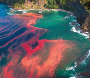 http://www.ecologiaverde.com/efectos-de-una-marea-roja/